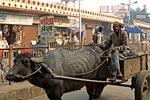 Северная Индия, Матхура