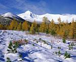 26-го сентября поблизости от горы Неройка. Заснеженная вершина Неройки выделяется на заднем плане.