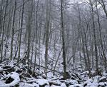 Лес в долине реки Фиагдон