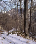 Лес, в долине реки Фиагдон