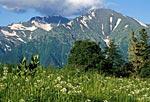 Россия, республика Адыгея, Кавказский природный биосферный заповедник, массив Абаго