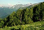 Россия, республика Адыгея, Кавказский природный биосферный заповедник, массив Тыбга