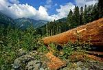 Россия, республика Адыгея, Кавказский природный биосферный заповедник, река Киши, близ Сенной поляны