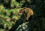 Медведь с полминуты покрутился на месте, прежде чем осознал происходящее и быстро понёсся вниз по снежнику.