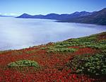 Красный, зелёный, синий. Осень, как всегда, поражает своими яркими красками. Снято на гребне мыса Таран. Вид на мыс Скалистый и внутренние горы полуострова.