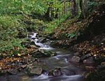 Небольшой ручей в окрестностях кордона Пслух