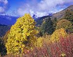 Красный, жёлтый, зелёный, синий. И всё такое яркое. Запылала осень в первый день солнечной погоды, который состоялся, когда вышли в предвершинную часть горы Коготь.