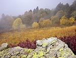 Под горой Коготь жили на высоте, где уже заканчивается лес. На этой же высоте постоянно клубились облака в послеобеденное время. Туман привносил некоторую таинственность осеннему пейзажу.