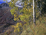 В основной части долины реки Холодной, впадающей в Уруштен в его верховьях, осень уже потеряла свои яркие краски. Лишь на правом склоне долины, обращённом к югу,  всё ещё в полном разгаре.