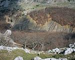Там, где начинается спуск с Караби-Яйлы на Рыбачье, на поверхность выходят глины. В отличие от окружающих их известняков глины хорошо размываются и служат водоупорным горизонтом. Поэтому тут образовался глубокий овраг, борта которого поросли лесом. Здесь