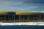 Река Мома, Большая Момская наледь(Улахан-Тарын)